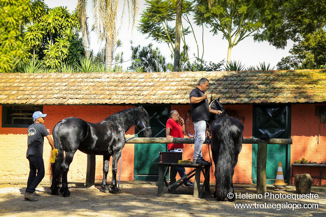 Atrela_Holambra-0105