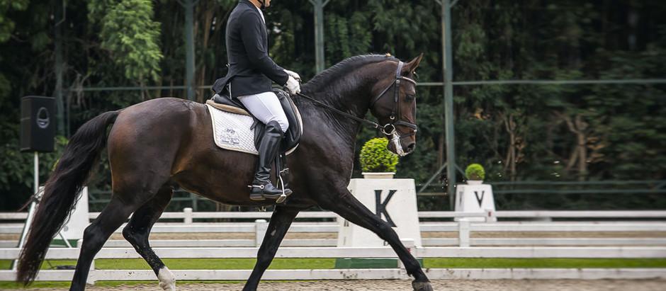 Adestramento e Equitação de Trabalho em disputa no Haras das Mangueiras