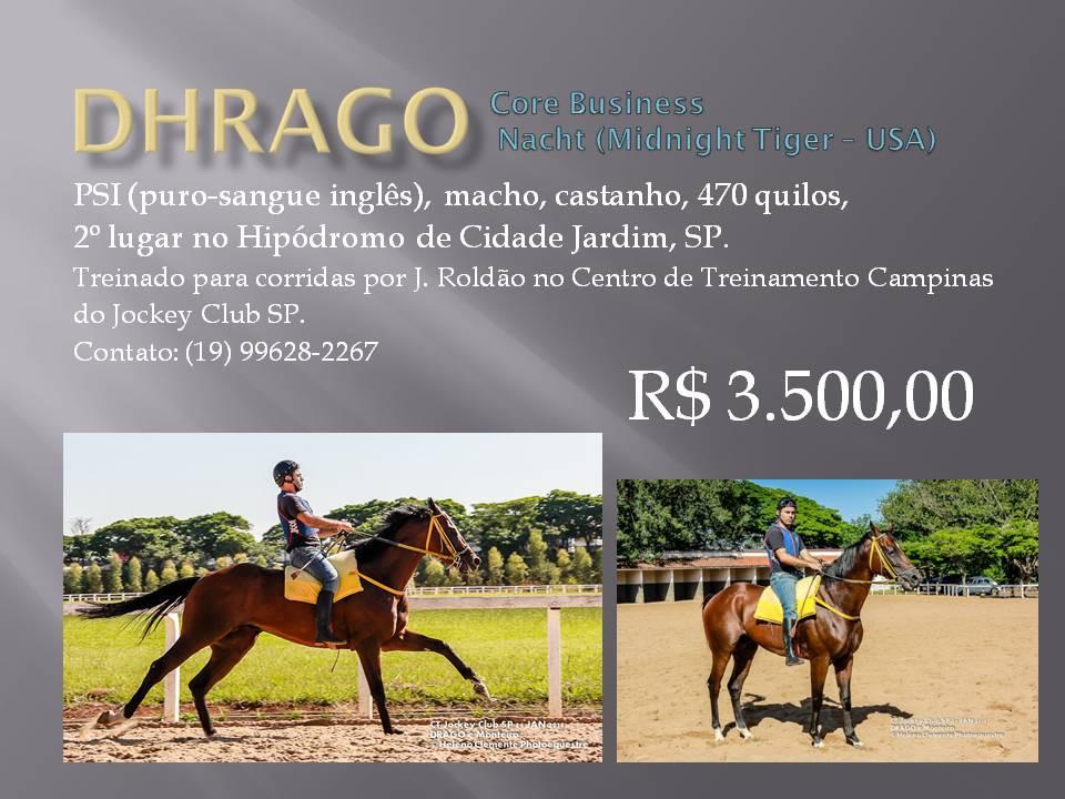 DHRAGO cavalo de corrida à venda