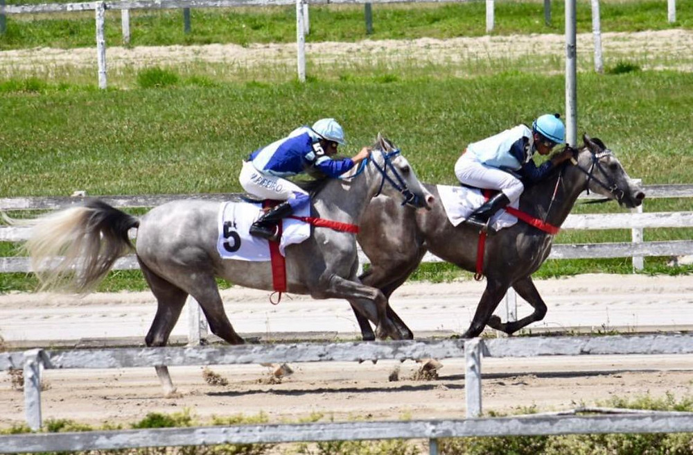 Corrida Cavalo Árabe Jockey Club de São Paulo (foto Ricardo Saliba)