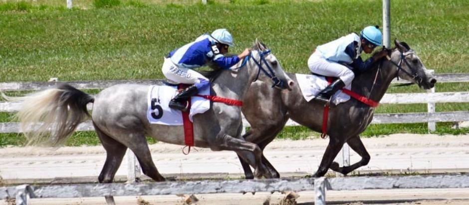 Cavalo Árabe abre temporada de corridas 2021 nesse fim de semana no Jockey Club de São Paulo