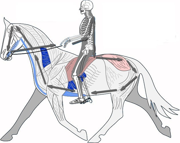 esqueleto cavaleiro.jpg