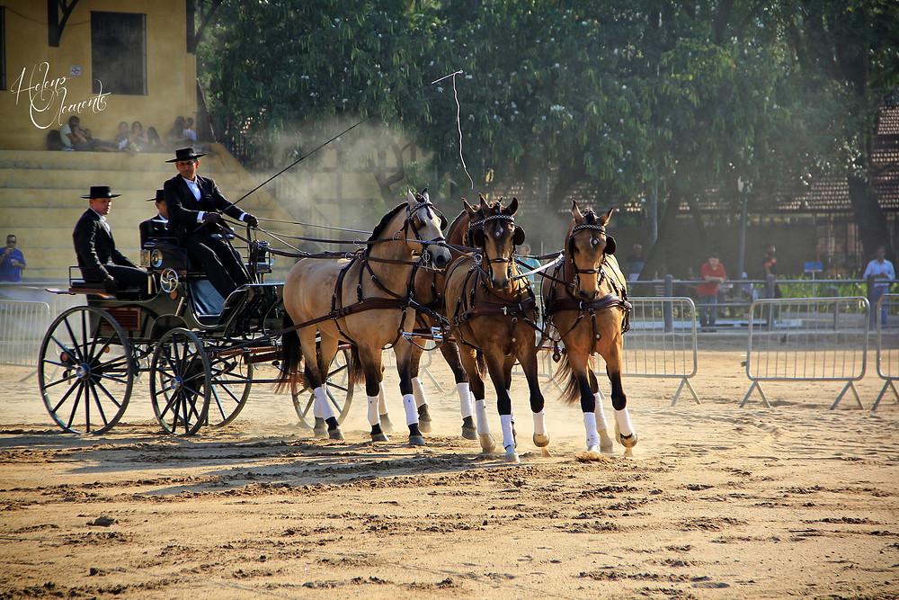 Atrelagem Interagro na Expo Cavalos do Parque da Água Branca