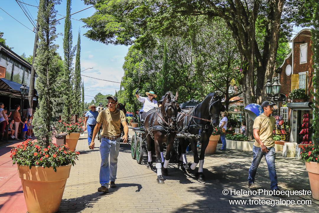Atrela_Holambra-0527
