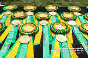 Concurso Internacional de Adestramento Coudelaria Ilha Verde