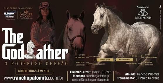 Conheça mais sobre Thegodfather, garanhão chefe do Rancho Palomita nas redes sociais pelo @thegodfatherrp.