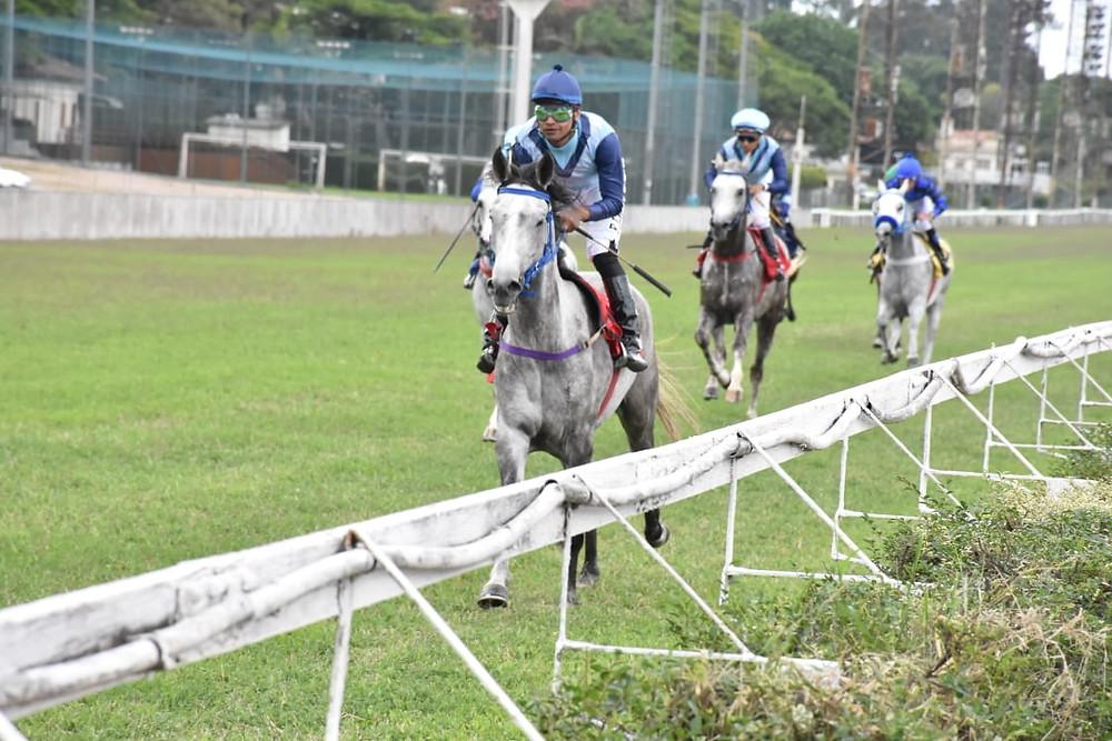 Corrida do Cavalo Árabe em pista de grama em Cidade Jardim (Divulgação /ABCCA)
