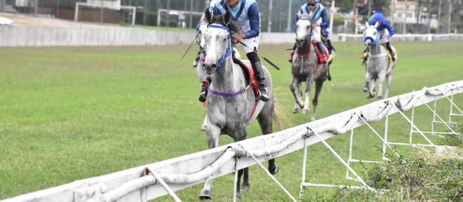 Prêmio President Cup Series do Cavalo Árabe acontece neste sábado (10/4) em Cidade Jardim
