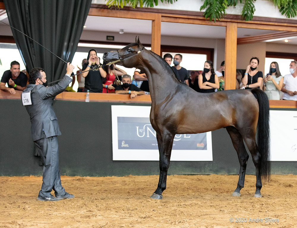 Campeão Cavalo Jovem (foto André Shiwa)