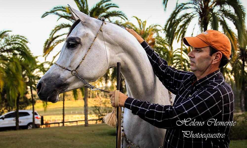 cavalo_arabe.jpg