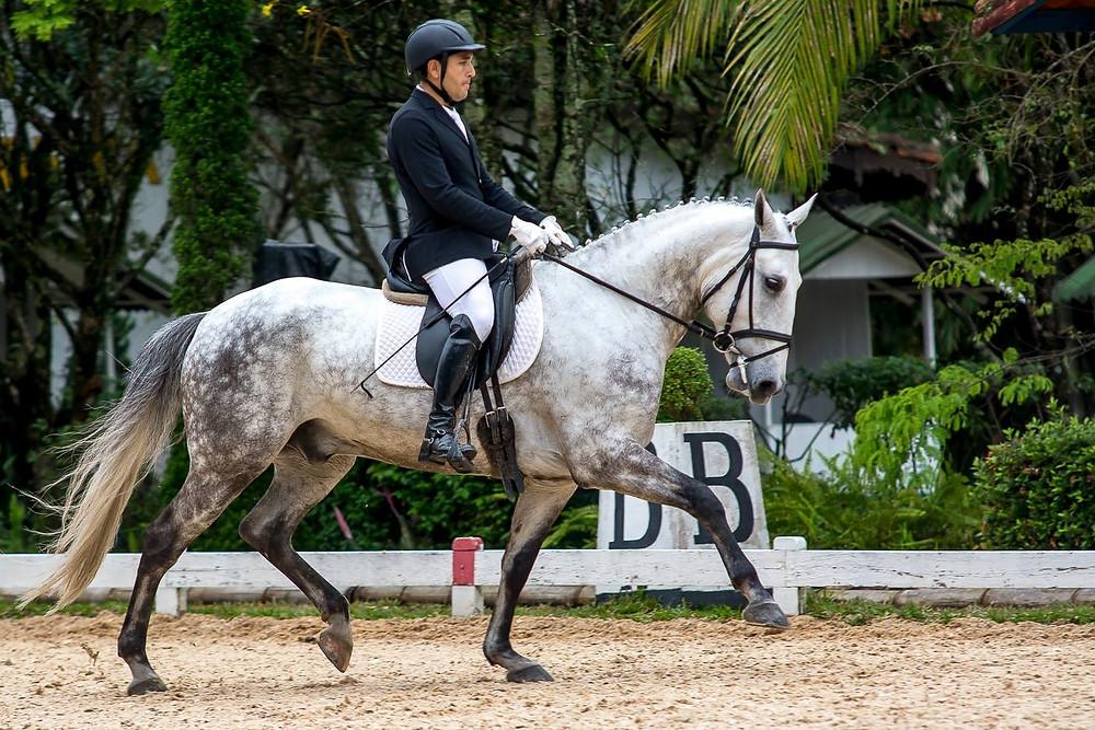 Associação Brasileira de Criadores do Cavalo Puro Sangue Lusitano (ABPSL) realiza um grande evento no próximo fim de semana (09 a 11/12). As atividades acontecem no Centro Hípico de Tatuí (SP)