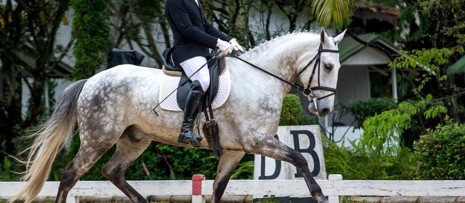 Festival Kia Motors do Cavalo Lusitano acontece em Tatuí (SP), de 9 a 11/12