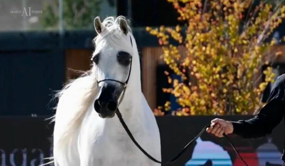 BIANCA AL, campeã sênior Intercup (foto Arabian Insider)