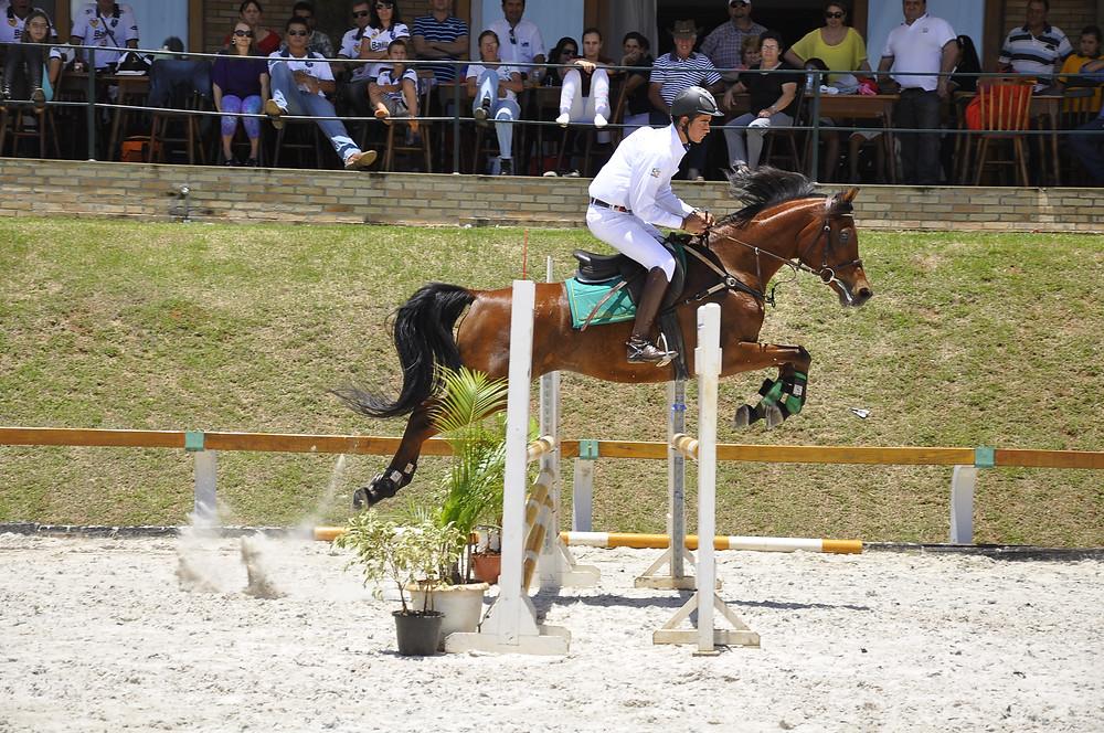 Cavalo Árabe competindo na modalidade de Salto (Divulgação ABCCA)