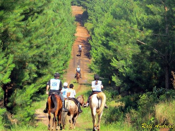 A I Etapa do Campeonato Paranaense de Enduro acontece em 21/05, na Fazenda Thalia, em Balsa Nova, região de Campos Gerais, local de belas paisagens que, assim como o esporte, reserva muita emoção aos competidores. As inscrições já estão abertas e podem ser feitas com 10% de desconto até amanhã (11/05) através do site www.chevaux.com.br.