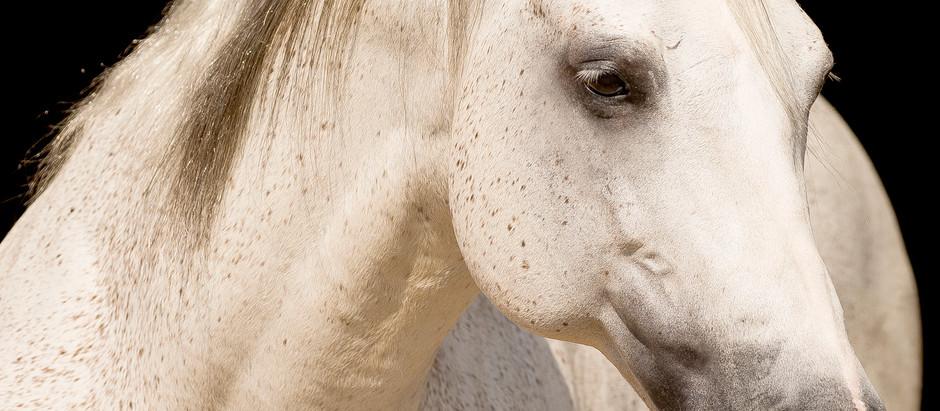 DHL Ranch apresenta Starlighting, garanhão versátil e pedigree nobre