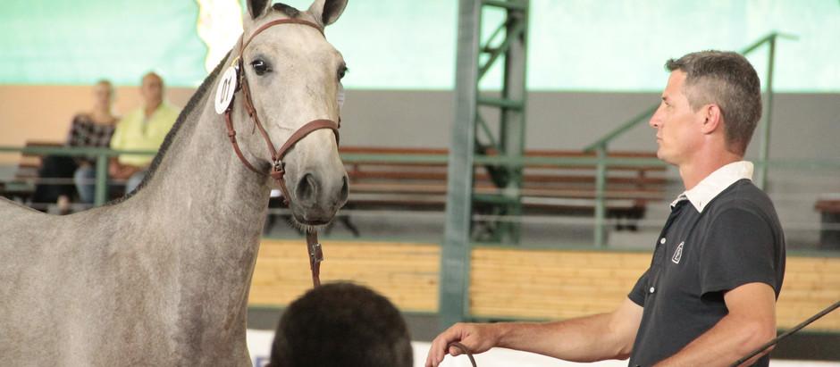 Internacional do Cavalo Lusitano começa nesta sexta (27/04) e termina domingo (29/04)
