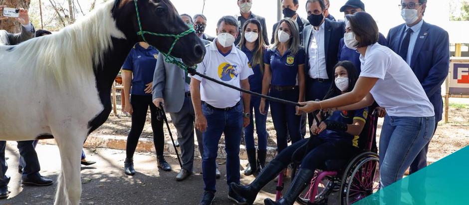 Associação Nacional de Equoterapia recebe 11 cavalos da raça Mangalarga Marchador