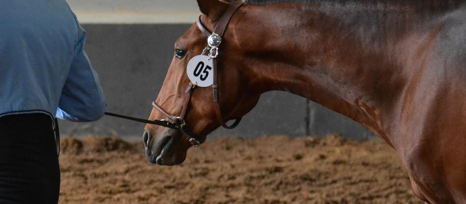 Expo Internacional do Cavalo Lusitano em Tatuí, de quinta a domingo.