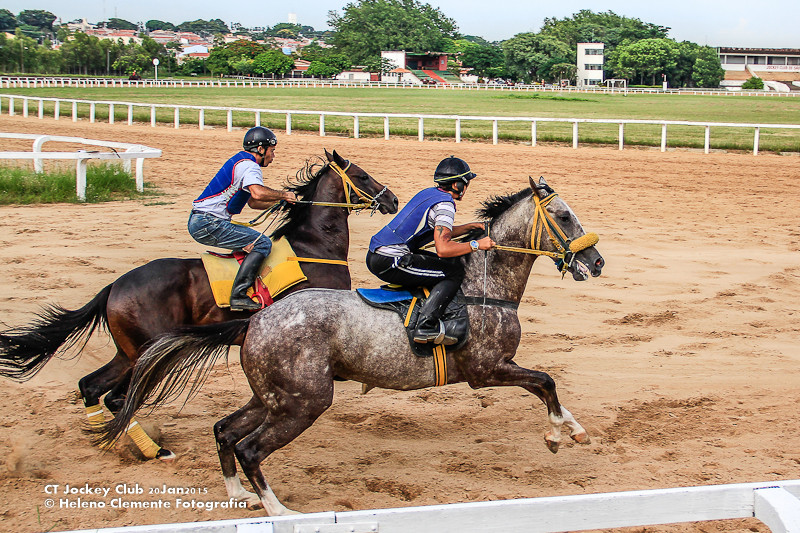 Jóquei e cavalo mais confiantes