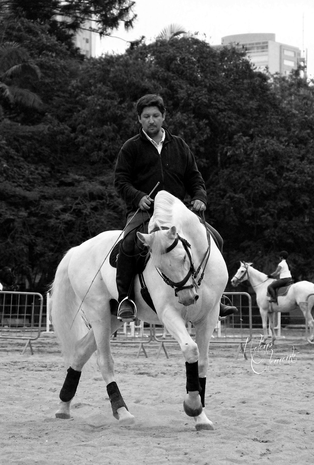 Adestramento clássico no Parque da Água Branca, durante a Expo Cavalos