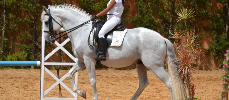 Brasileiro de Equitação de Trabalho