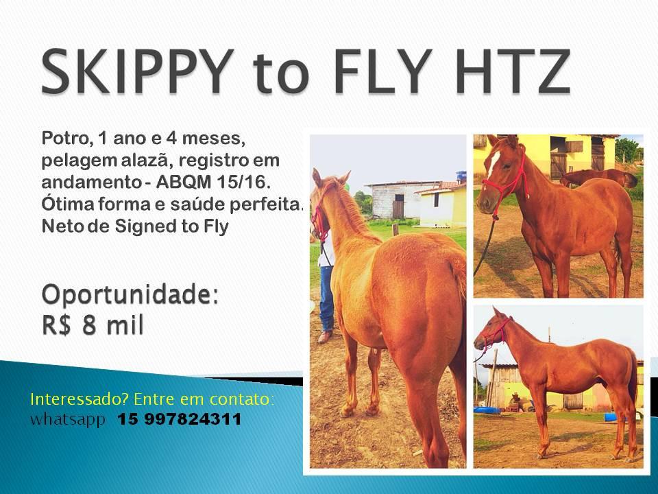 SKIPPY FLY oportunidades de bons negócios, com cavalos de boa genética