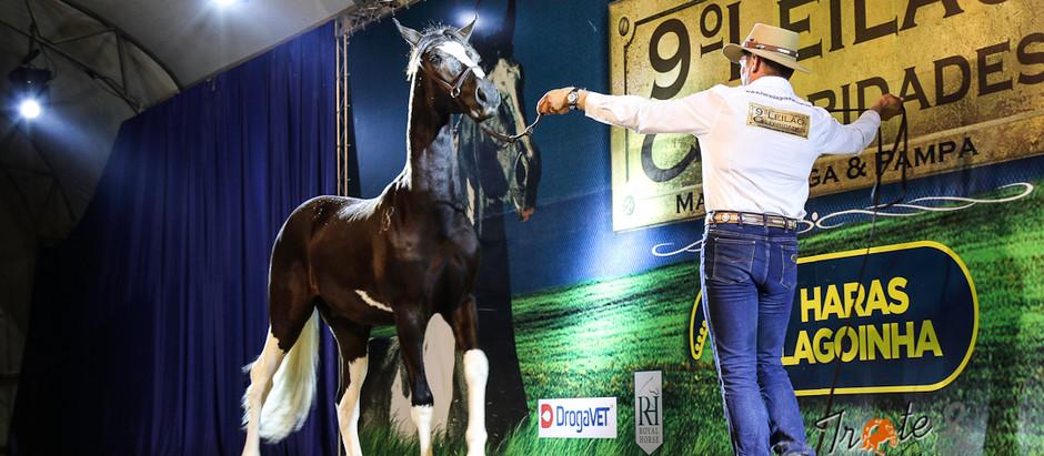 Celebridades: a festa do cavalo Mangalarga Pampa no leilão mais esperado da raça