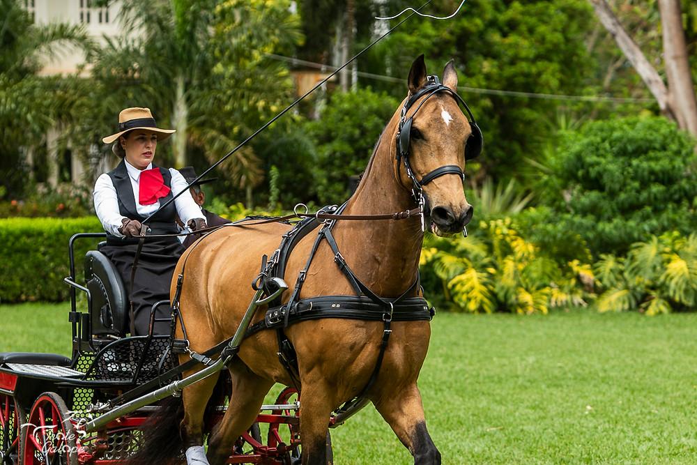 Rafaela Meibach conduzindo Cagliostro Interagro