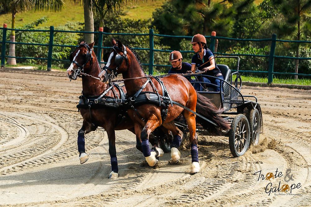 Derby do Cavalo Lusitano, Carol Borja
