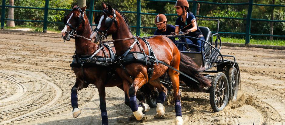 Ranking de Atrelagem Esportiva realiza Derby do Cavalo Lusitano e leva adrenalina às competições de