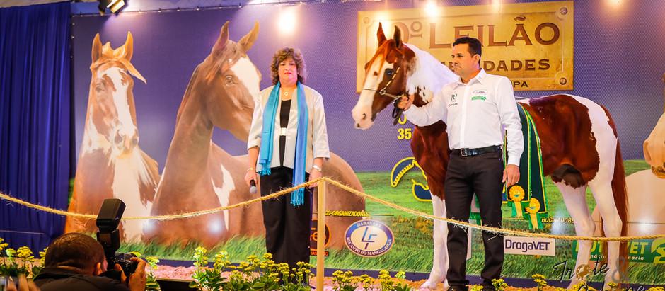Nova geração do cavalo Mangalarga Pampa tem a marca PEC, do Haras Lagoinha