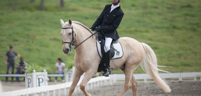 Cavalo Lusitano terá maior evento  mundial da temporada, no Brasil.