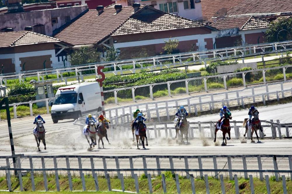 Páreo irá reunir sete potros da raça Árabe nos 1.100 metros na pista de areia do Hipódromo de Cidade Jardim (Divulgação/ABCCA)