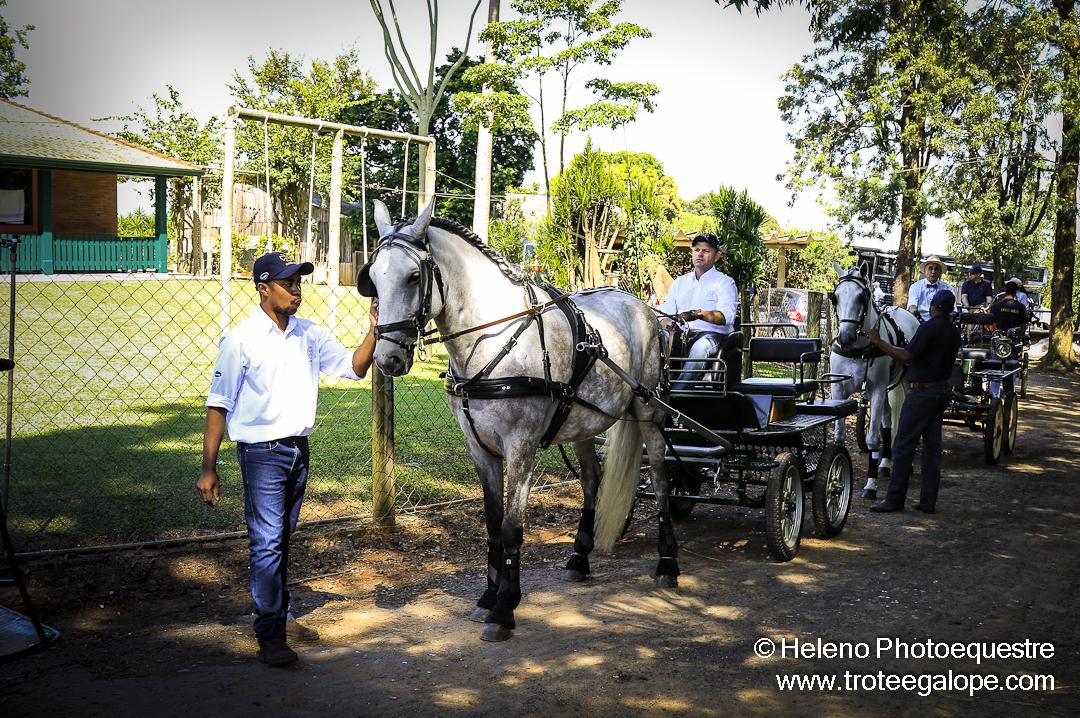 Atrela_Holambra-0266