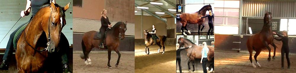 Pela primeira vez, a especialista equestre Claudia Wolters vem a São Paulo para ensinar a respeito da assimetria natural do cavalo, como manter o cavalo equilibrado, trabalho do cavalo no chão, na guia, na mão, montado e em liberdade.