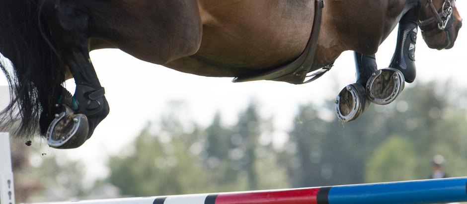 Animais atletas recebem cuidados especiais nas Olimpíadas, revela especialista