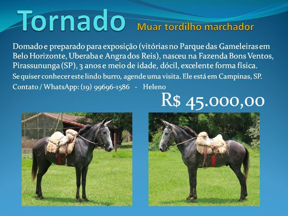 Tornado oportunidades de bons negócios, com cavalos de boa genética