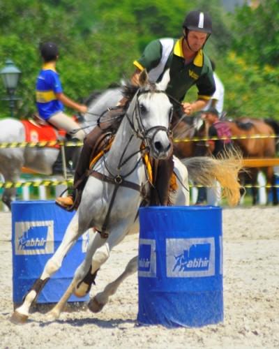 Hipismo Rural uma das modalidades praticadas pelo Cavalo Árabe (Divulgação /ABCCA)