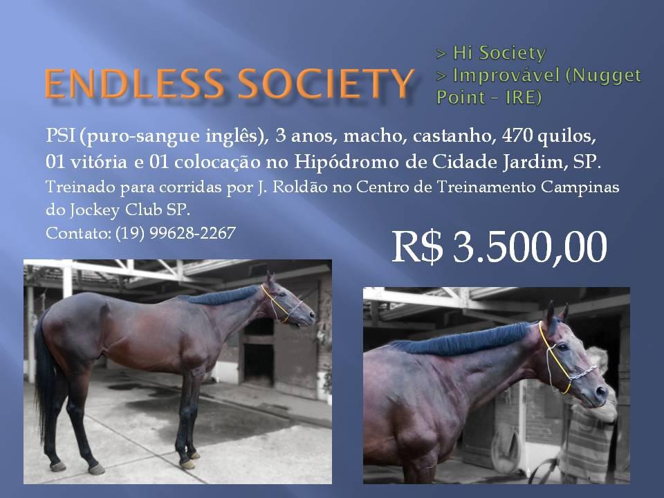 Endless Society cavalo de corrida à venda