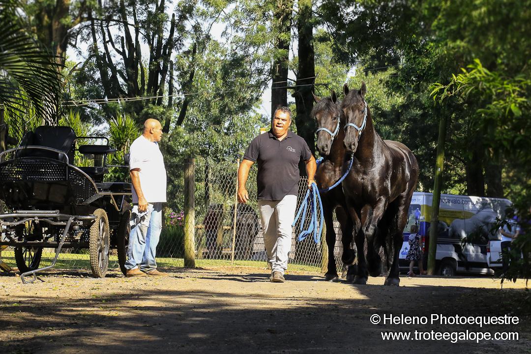 Atrela_Holambra-0048