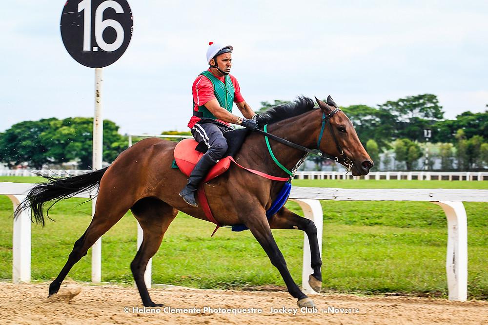 Potra égua à venda Jockey Club, Trote e Galope