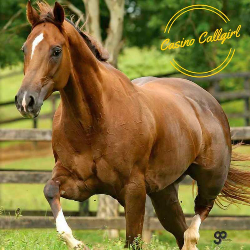 Égua ofertada pelo B2B Ranch foi destaque do Leilão Haras Raphaella – Show de Estrelas, arrematada pelo Rancho Faria.