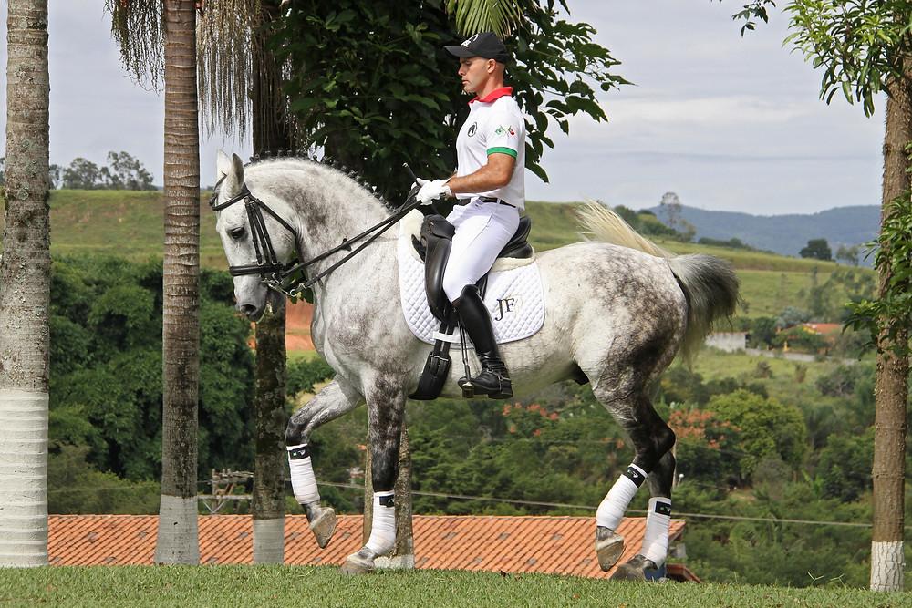 postando no mercado brasileiro de cavalos, o cavaleiro de adestramento José Faria, português que veio para o Brasil a pouco mais de três anos, está à frente do Centro Hípico JF em Franco da Rocha, a 50 km da capital paulista.