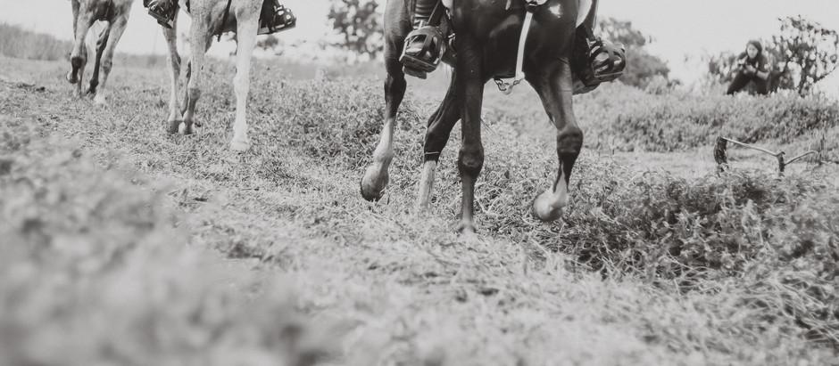 Enduro Equestre ganha novo fôlego no RJ