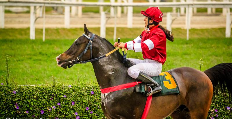 Jockey Club SP realiza 1º Grande Prêmio — Câmara Árabe — do Cavalo Árabe em 2017