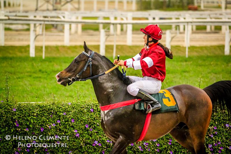 o Cavalo Árabe volta a ser destaque nas pistas do Jockey Club de São Paulo com a 1ª Prova Clássica da história do Cavalo Árabe no Brasi: GP Câmara Árabe.