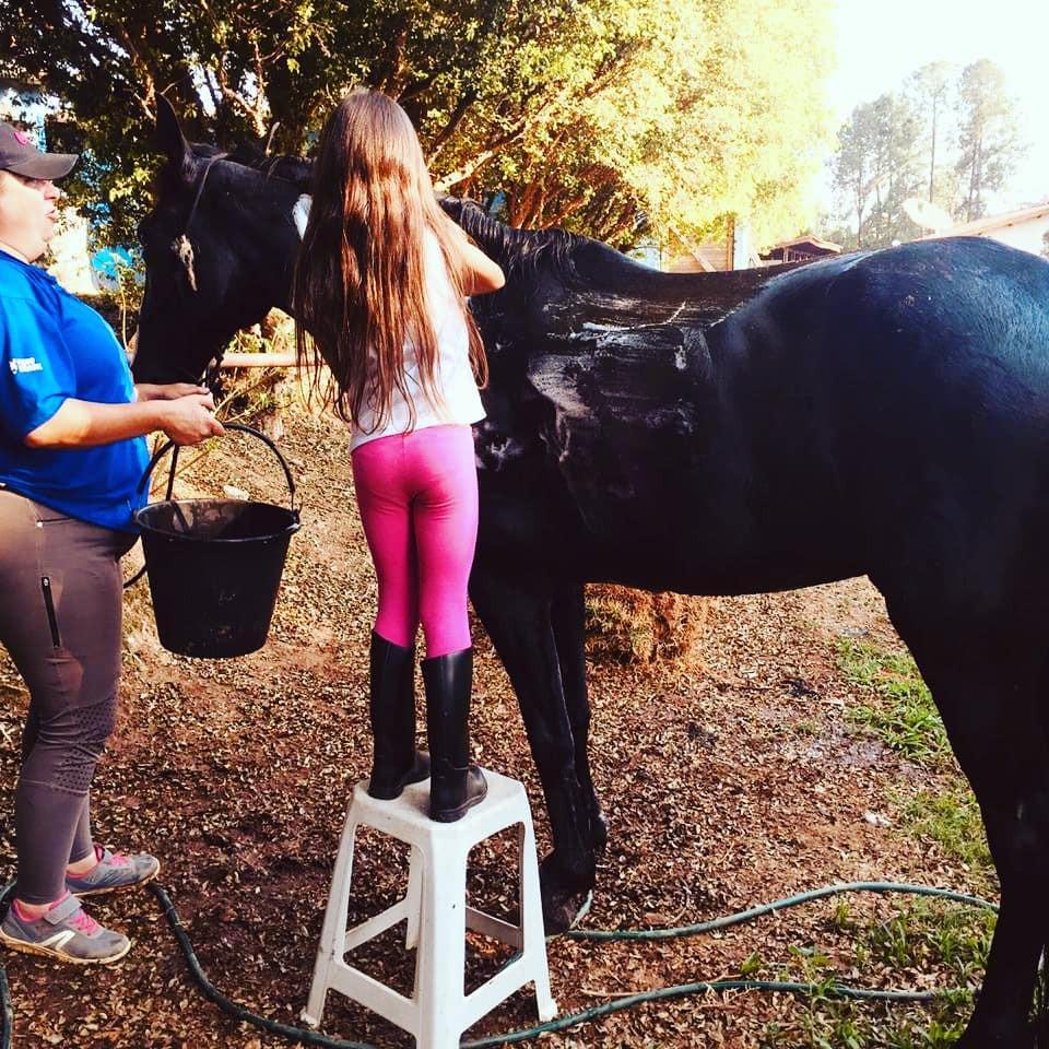 Quem quer ter um cavalo deve aprender pelo menos o manejoo básico.