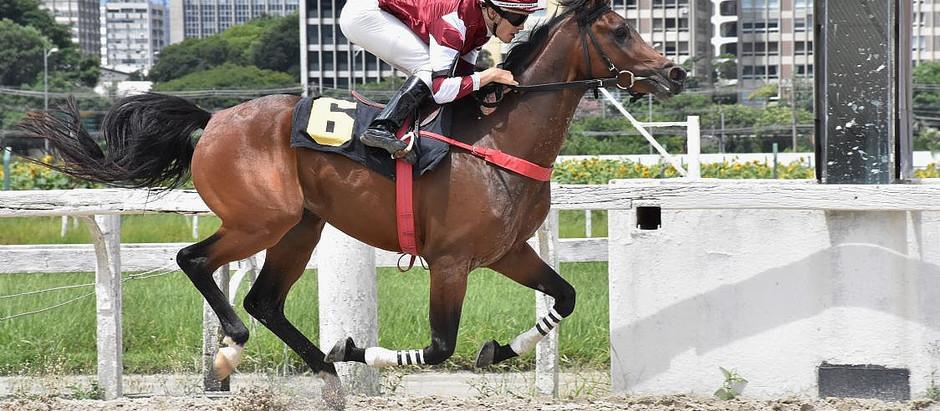 1º páreo abre temporada de Corridas do Cavalo Árabe com sucesso
