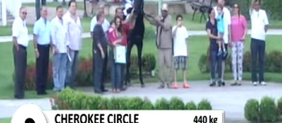 """Chegada de cinema no páreo de """"claiming"""": Cherokee Circle sob holofotes."""